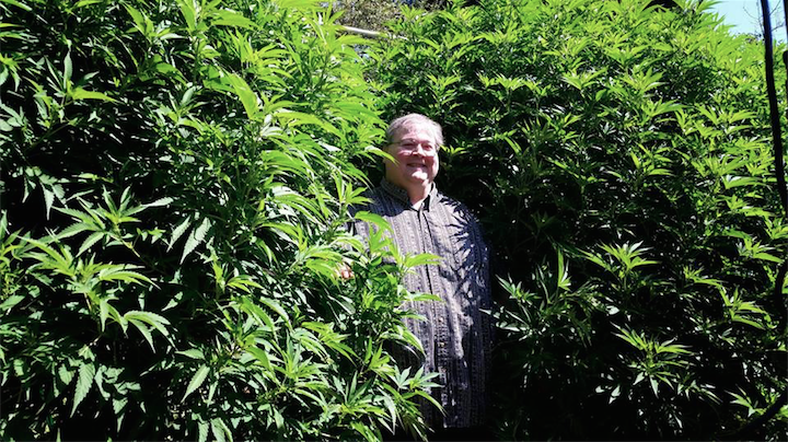 Paul-Stanford-in-Award-Winning-THCC-Farms-Cannabis-Garden